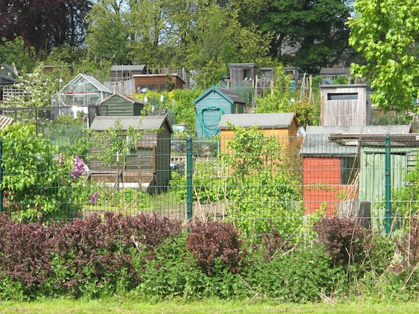 Three New Edinburgh Allotments To Open This Year The