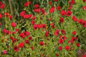 TER Botanics red flowers