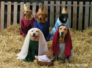 dugs in pubs christmas special