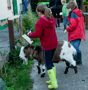 young farmers club at Gorgie City Farm