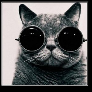 schroedinger's cat image