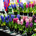 Image: Royal Caledonian Horticultural Society