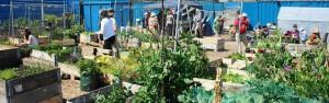 grove community garden