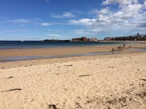 Beach Walks with Dogs