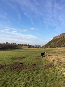 Salisbury Crags dog walk