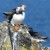 You could almost touch the puffins on the Isle of May