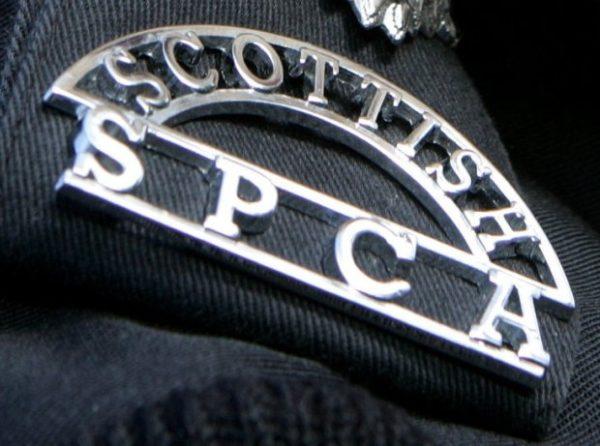 Volunteers Needed For Santa Paws Event In Livingston The Edinburgh Reporter