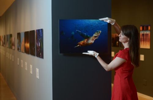 51st Wildlife Photographer of the Year Exhibition Friday 16 September 2016 to 19 February 2017 National Museum of Scotland, Chambers Street, Edinburgh The world-renowned Wildlife Photographer of the Year exhibition, on tour from the Natural History Museum in London, will open at the National Museum of Scotland on Friday 16 September 2016. This will be the only Scottish venue for the exhibition, which will feature 100 awe-inspiring images, from fascinating animal behaviour to breath-taking wild landscapes. Wildlife Photographer of the Year is the most prestigious photography event of its kind, providing a global platform that showcases the natural worldÕs most astonishing and challenging sights for over 50 years. Launching in 1965 and attracting 361 entries, today the competition receives almost 50,000 entries from 95 countries highlighting its enduring appeal. The 100 images from the fifty-first competition have embarked on an international tour allowing them to be seen by millions of people across six continents. Through the lens of wildlife photography, the exhibition captures the intrigue and beauty of our planet, giving us a glimpse of the natural world as it has never been seen before. Kirsten Cowie of the Museum places Turtle Flight by David Doubilet. Neil Hanna Photography www.neilhannaphotography.co.uk 07702 246823