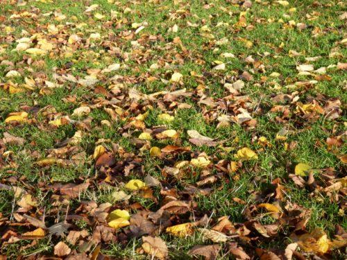 Remembering fallen leaves
