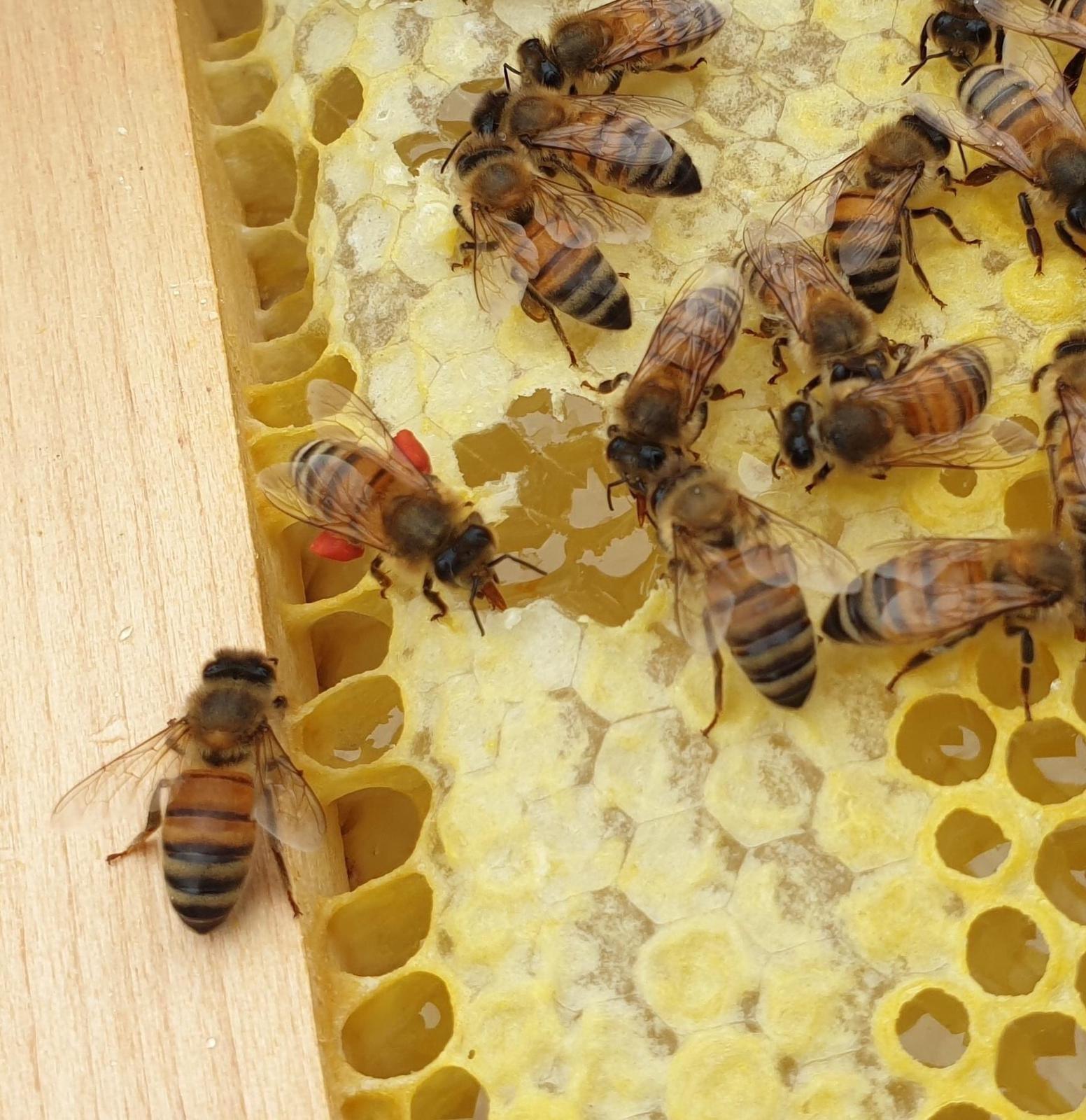 Sweet deal for Webster Honey