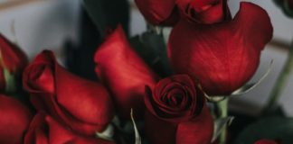 An image of roses